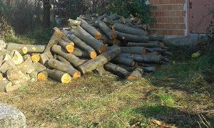 Akcija akcija akcija bukova drva u svim oblicima 061 06