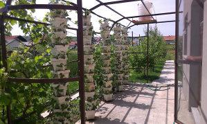 Saksije za jagode od stiropora