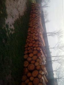 Drva borova suha