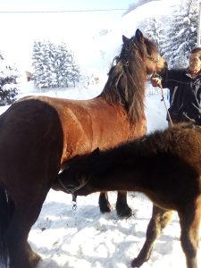 Konj i Kobila u paru