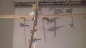 Ptice tigrice