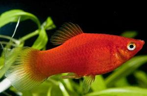 Plate ribice i akvarijumi