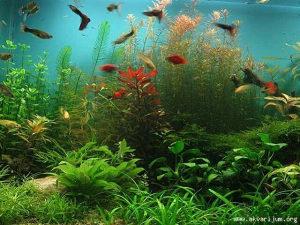 Primam na poklon akvarijumske ribice