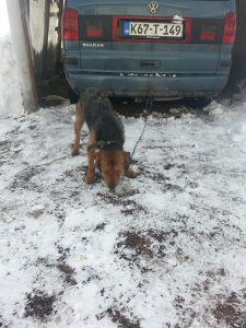 Lovački pas