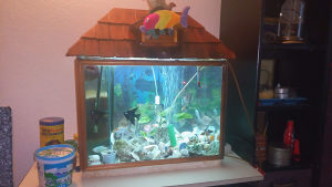 akvarijum i ribice
