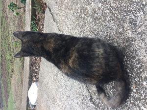 Lijepa crna maca