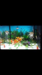 Akvarijum 80litara