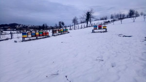 PRODAJEM PČELE JAKA I ZDRAVA DRUŠTVA