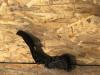 Papucica gasa Polo 2012. 1.2b/6Q1 721 503 M