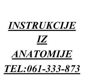 Instrukcije iz Anatomije i Neuroanatomije