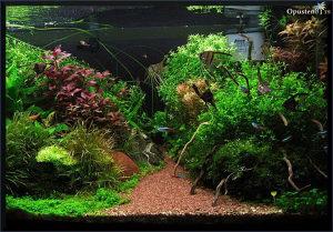Primam na poklon akvarijumske biljke