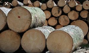 Celuloza drvo