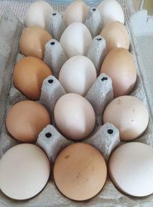Prodajem domaća jaja