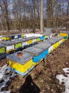 Pčele drustva pčelinja društva rojevi komplet košnica