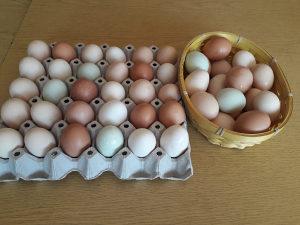 Domaća jaja