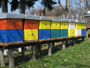 pčelinja društva LR sa košnicama (dva nastavka)