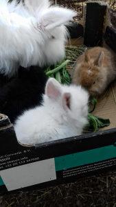 Prodaja zečeva