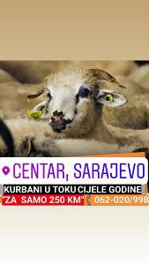KURBANI - AKIKA KURBAN 062-020/998