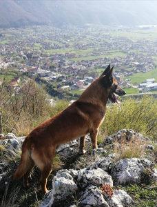 Profesionalna dresura pasa i pansion(smjestaj)za pse