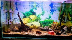 akvarij za ribe
