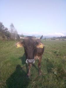 Krave muzare