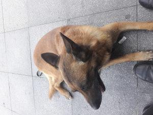 Dresura pasa i pansion za pse