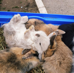 DOSTAVA Patuljasti kunić kunići zec zečevi HRANA GRATIS