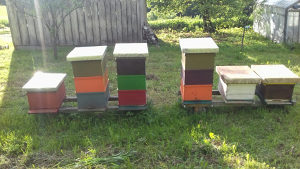Košnice sa pčelama lr košnice pčele
