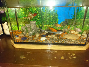 Akvarijum s ribicama