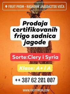 Frigo sadnice jagode sa certifikatom
