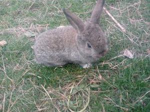 Prodajem male zeceve