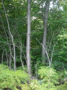 Zemljište (šuma, voćnjaci i livada)