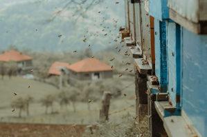 Mladi rojevi pčela, košnice