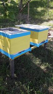 Pčele (ovogodišnji rojevi)