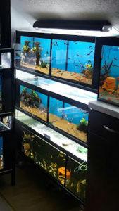 Komplet stalaza sa 5 akvarijuma