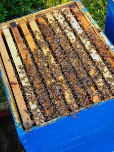 Prodajem pčele