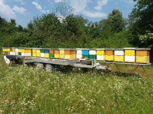 Prikolica za prevoz pčela i kontejner