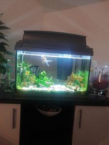 Akvarijum 60l