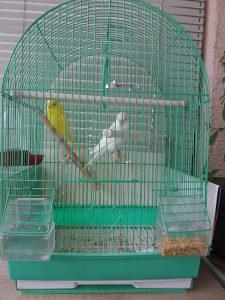 Papagaji sa kavezom