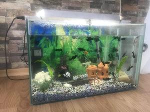 Akvarijum sa komplet opremom i ribicama