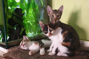 Mali slatki macici / macic na poklon