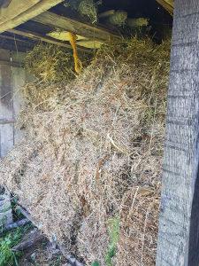 Bale sijena  (ovogodisnje, prva i druga trava)