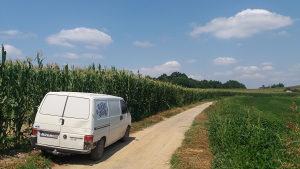 Silaža kukuruza 1000 tona