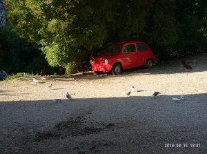 Birmingeni birmingham golubovi