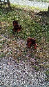 Lovacki psi