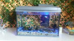 Akvarijum tetra 60L