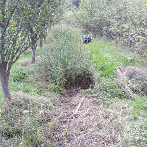 Ziva ograda sadnice
