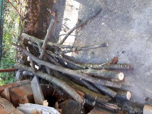 Orahovo drvo cijelo stablo