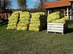 Voće jabuke