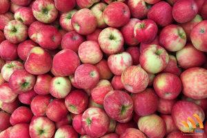Industrijska jabuka